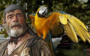 Pirates of the Caribbean parrot